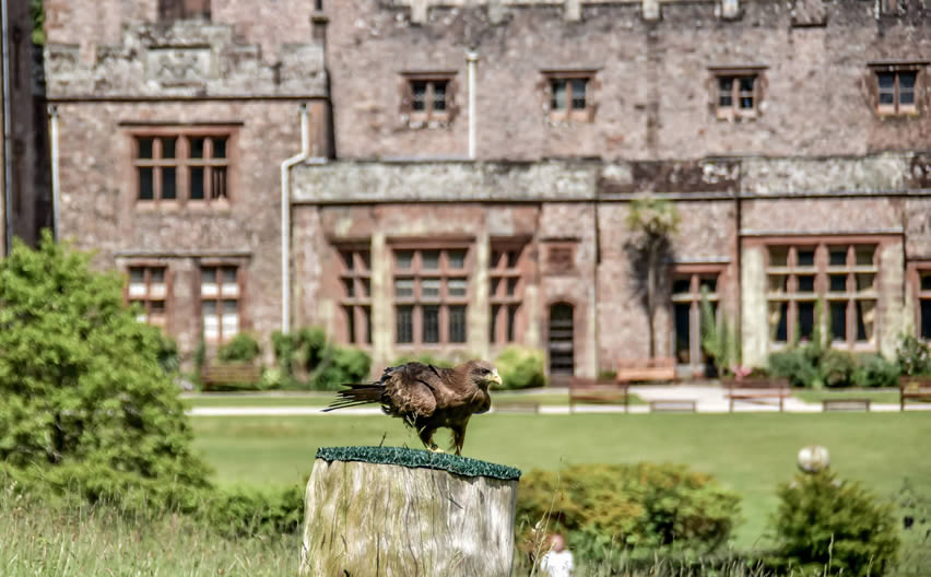 Conservation matters at Muncaster Castle