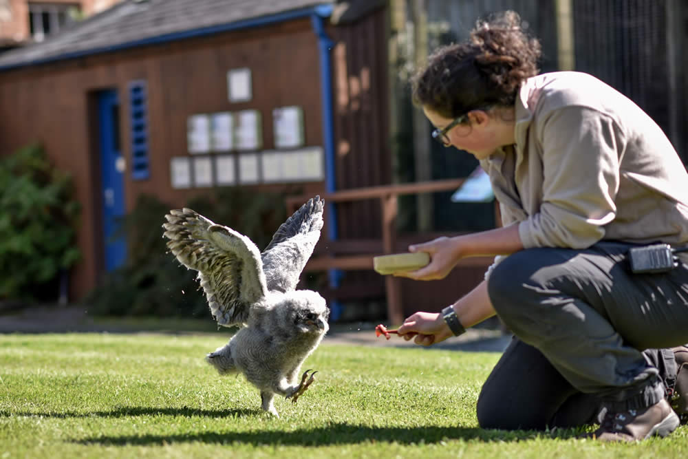 Group visits to the Hawk & Owl Centre at Muncaster Castle
