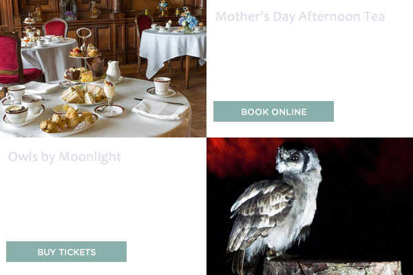 Owls by Moonlight & Mother's Day Afternoon Tea