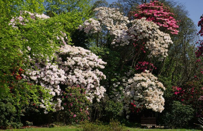 large-rhododendron-gardens