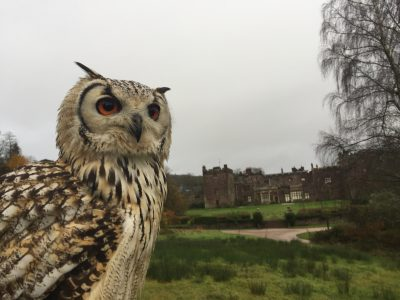 Owl in front of the castle