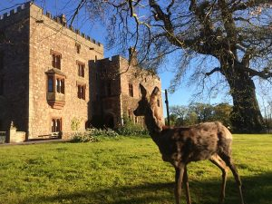 Conservation matters at Muncaster