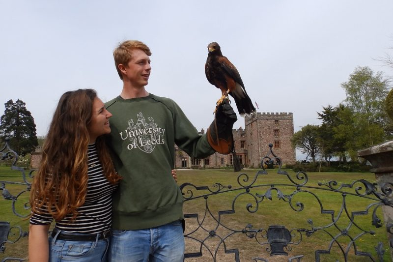 Hawk Walk with Muncaster Hawk & Owl Centre