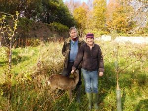 Twiggy the roe deer with parents