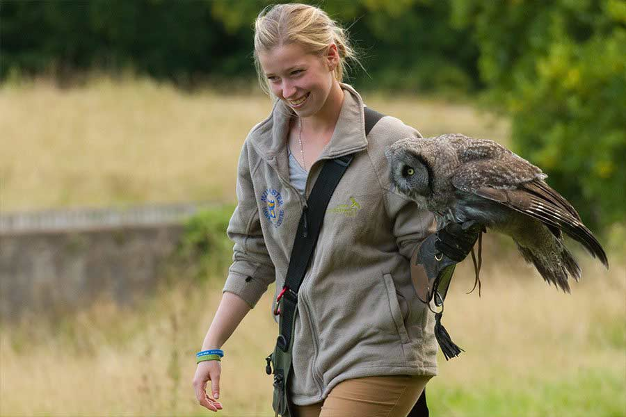 Muncaster Hawk & Owl Centre - falconer Emma with Ash the Great Grey Owl