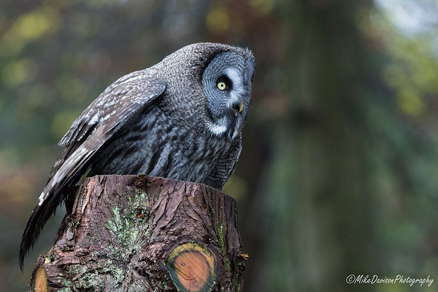 One of our owls on our family day out in cumbria