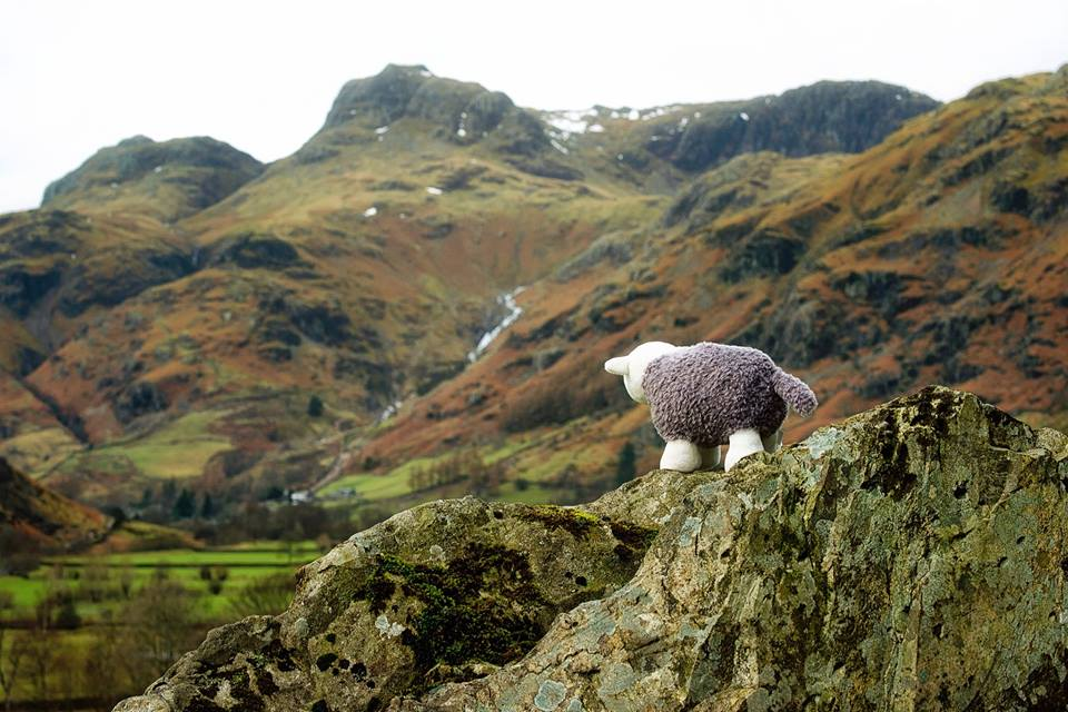 herdy random acts of kindness