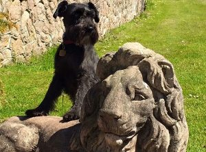 dog friendly days out muncaster