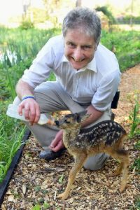 Peter FP & Twiggy roe deer