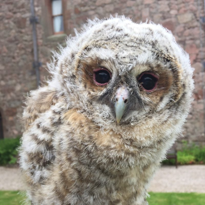 Muncaster Hawk and Owl Centre