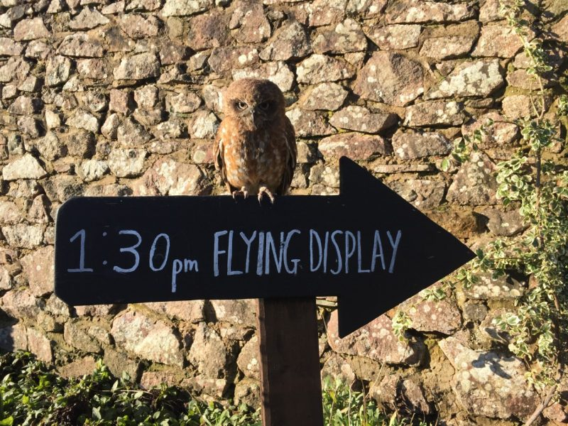 whippet the owl on the display sign