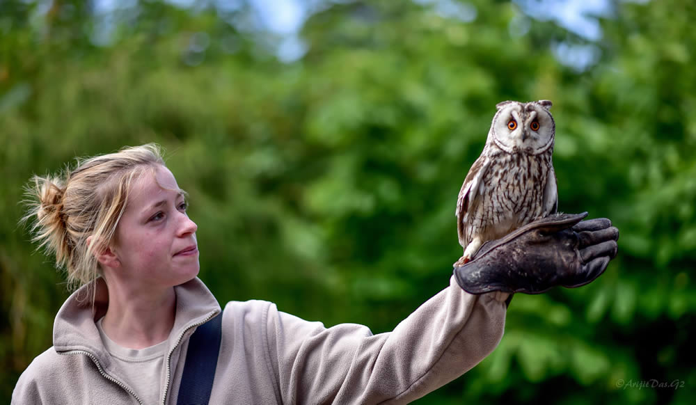Hawk & Owl Centre: Learn about the birds