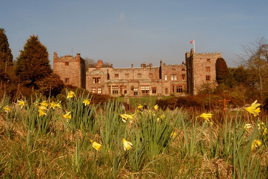 Daffodils in front of the castle
