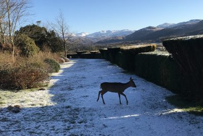 twiggy the deer in the snow